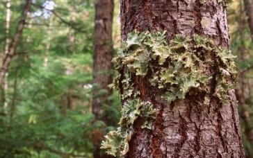 Insert lichen pun here.